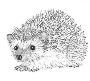 hedgehog 4 j