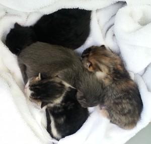 kittens 1